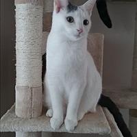 Adopt A Pet :: Sophie - Cedar Springs, MI