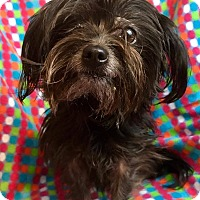 Adopt A Pet :: Cotton Candy Garnet - Cleveland, OH
