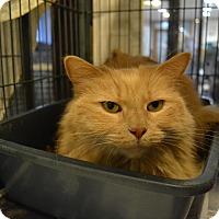 Adopt A Pet :: Cindy - Broadway, NJ