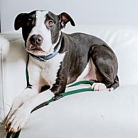 Adopt A Pet :: Maui - Inglewood, CA