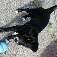 Adopt A Pet :: BABYFACE - Pt. Richmond, CA