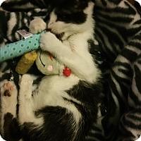 Adopt A Pet :: Larkin - Whitehall, PA