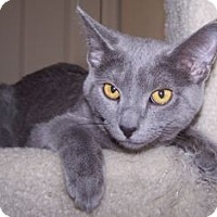 Adopt A Pet :: K-Nicholas4-Nimbus - Colorado Springs, CO