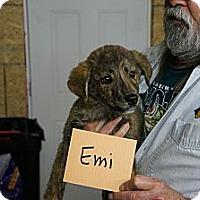 Adopt A Pet :: Emi - Conway, AR