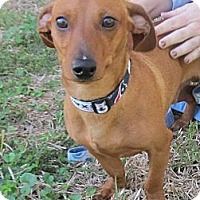 Adopt A Pet :: Guapo - Kingwood, TX