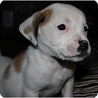 Adopt A Pet :: Zephyr - Mesa, AZ