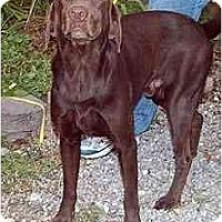 Adopt A Pet :: Sony - Cumming, GA