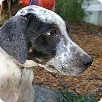 Adopt A Pet :: Eeyore - Niceville, FL