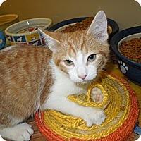 Adopt A Pet :: Ethan - Medina, OH