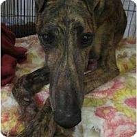 Adopt A Pet :: Fen (Abita Fenway) - Chagrin Falls, OH