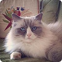Adopt A Pet :: Cecil - Davis, CA