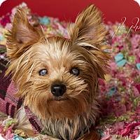 Adopt A Pet :: Heidi - Baton Rouge, LA