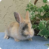 Adopt A Pet :: baby 2 - Bonita, CA