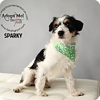 Adopt A Pet :: Sparky-Pending Adoption - Omaha, NE