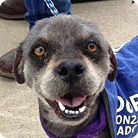 Adopt A Pet :: Bernie - Austin, TX