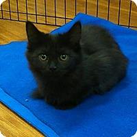 Adopt A Pet :: Betty - Hamilton, ON
