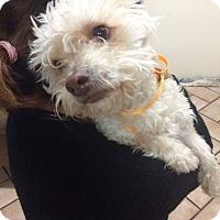 Adopt A Pet :: Mr. Wobbles - Phoenix, AZ