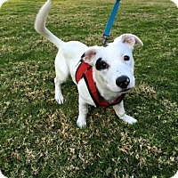 Adopt A Pet :: Pockets - Lomita, CA