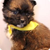 Adopt A Pet :: Bahamas - Waldorf, MD