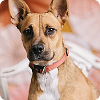 Adopt A Pet :: Lisa - Portland, OR