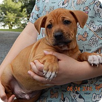 Adopt A Pet :: Kentucky (8 lb) Video! - Sussex, NJ