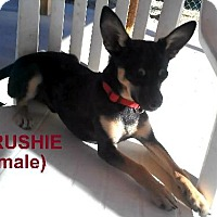 Adopt A Pet :: Rush - Golden Valley, AZ