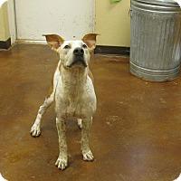 Adopt A Pet :: Robin - Groton, MA