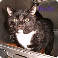 Adopt A Pet :: Rocky - El Cajon, CA