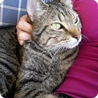 Adopt A Pet :: Teemo - Harrisonburg, VA