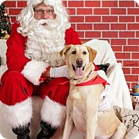 Adopt A Pet :: Roxy - San Francisco, CA