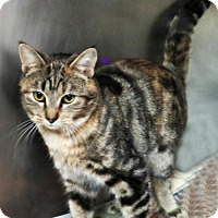 Adopt A Pet :: Honey - Herndon, VA