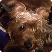 Adopt A Pet :: 'Retta - Oakland, CA