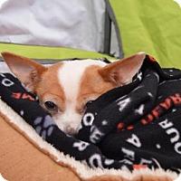 Adopt A Pet :: BETTY - Canton, GA
