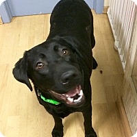 Adopt A Pet :: Sadie Mae in CT - Manchester, CT