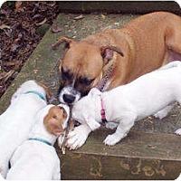 Adopt A Pet :: Guinevere - Marietta, GA