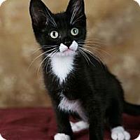 Adopt A Pet :: Dusty Rose - Eagan, MN