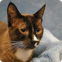 Adopt A Pet :: Machu - Sacramento, CA