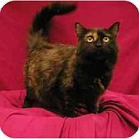 Adopt A Pet :: Jasmine - Sacramento, CA