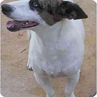Adopt A Pet :: Edie - Scottsdale, AZ