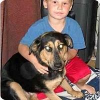 Adopt A Pet :: Talla - Glastonbury, CT
