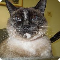 Adopt A Pet :: Grace - Medina, OH