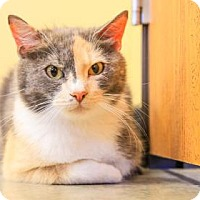 Adopt A Pet :: Alice - Larned, KS