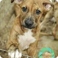 Adopt A Pet :: Wahoo - Gainesville, FL