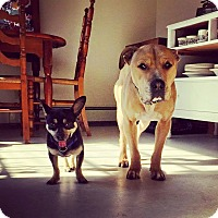 Adopt A Pet :: Sid - Acushnet, MA