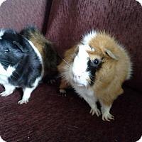 Adopt A Pet :: Milo & Gus - San Antonio, TX