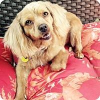 Adopt A Pet :: Suzie - Sacramento, CA