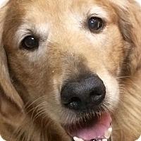 Adopt A Pet :: Chloe - Cheshire, CT