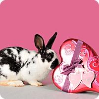 Adopt A Pet :: Bosco - Marietta, GA