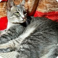 Adopt A Pet :: Peony - Fallbrook, CA