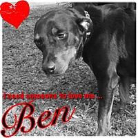 Adopt A Pet :: Ben - White Hall, AR